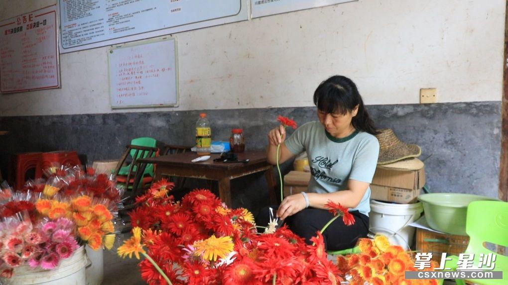 万亩花卉园基地内,工人们正忙着将花卉打包。均为 杨源 摄