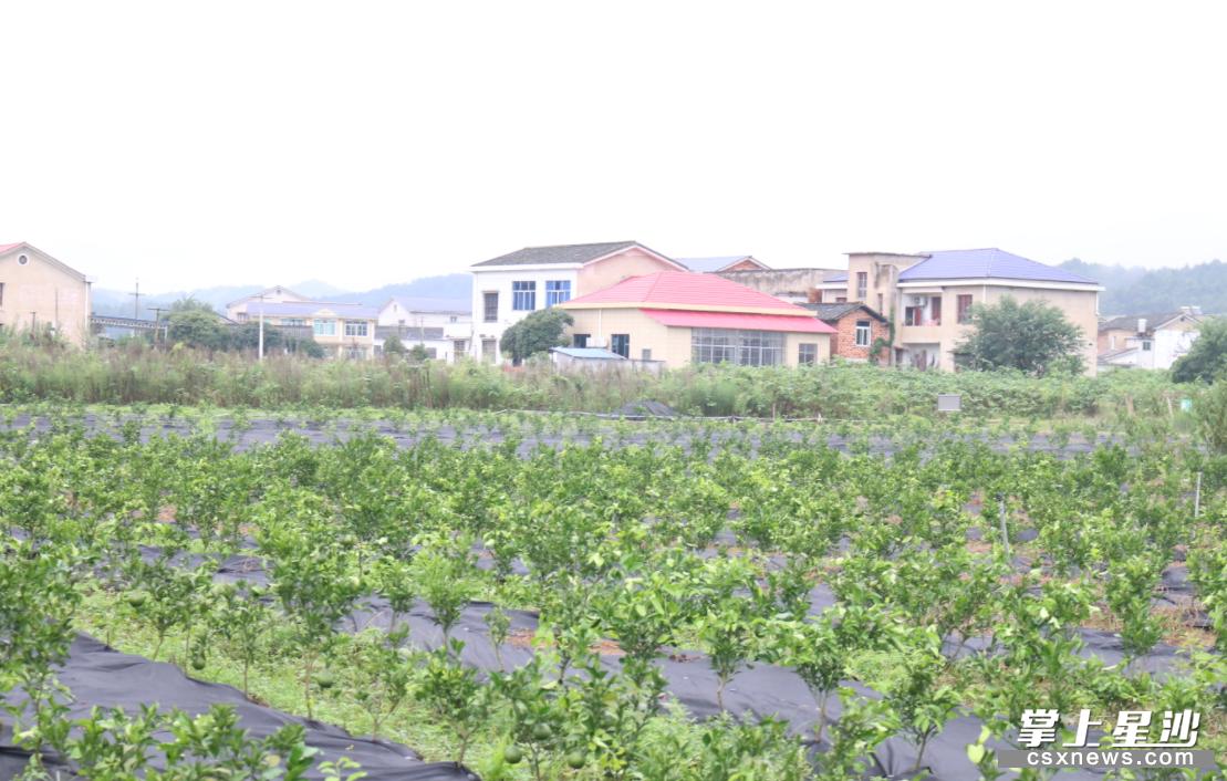 路口镇花桥湾村的果苗基地里,一排排各式的果苗已长出嫩叶,生命力十分旺盛。熊誉凯 摄