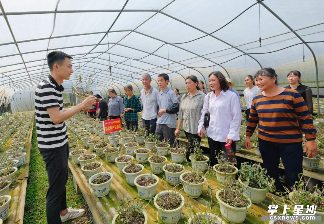 江背镇天大生物健康产业园的铁皮石斛种植大棚内,贫困户认真地听技术人员讲解如何浇水、除草等。章帝 摄