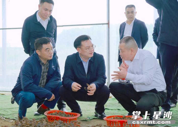沈裕谋、张作林一行在湖南融康中药种植基地,调研乡村产业发展情况。 章帝 摄
