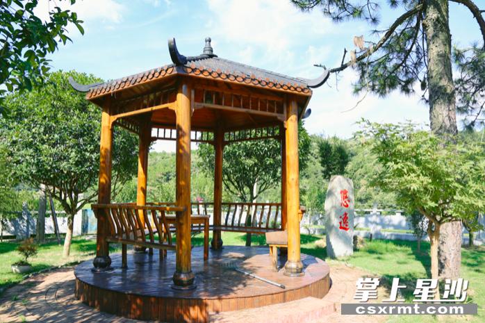 新明村宁家塅李正林家中美丽庭院宛如一个小公园。梁焕鑫 摄